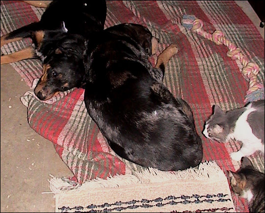 Cats and dogs, living together