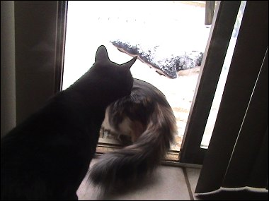 Othello and Olivia in the snow