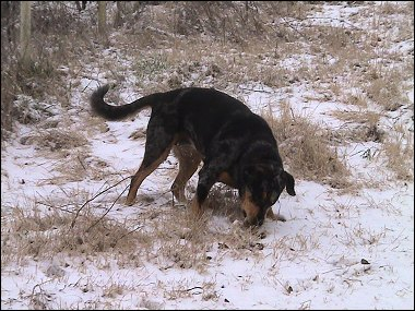 Xena in the snow