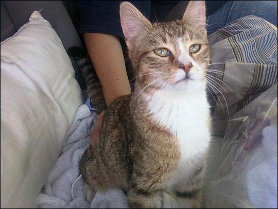New kitty