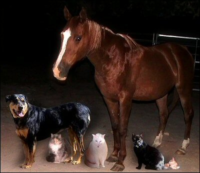 Earl's family portrait of critters - Xena, Chloe, Iago, Sultry, Othello, Olivia