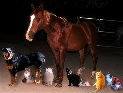 Earl's family portrait of critters - Xena, Chloe, Iago, Sultry, Othello, Olivia, Sampson, Gabby Cat