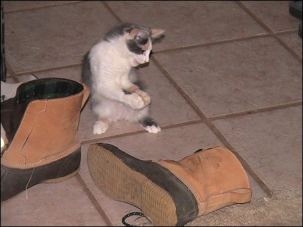 Olivia in Puss 'n' Boots