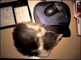Olivia asleep on my desk