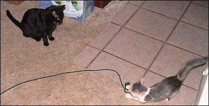 Olivia vs. string