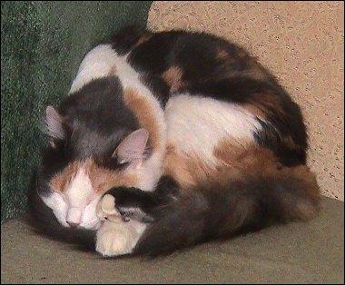 Olivia snoozin'