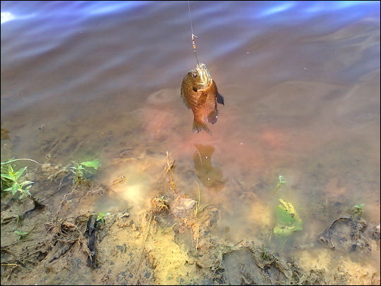 Fishin' reaction