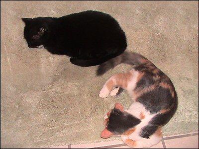Othello & Olivia snooze
