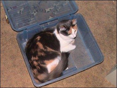 Boxed Kitten