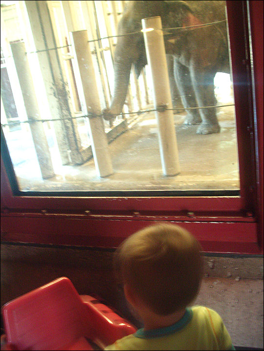 Evan's trip to the zoo