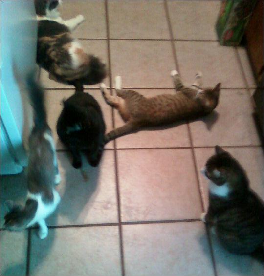 Five kitties