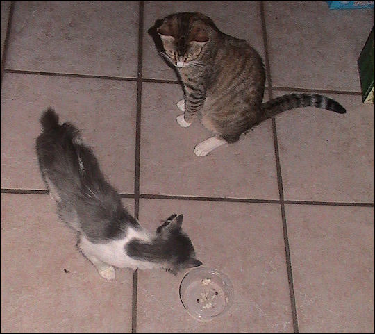 Portia and Maria sneak a snack