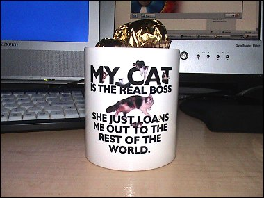 My Cat Is The Real Boss