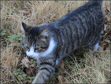 Mystery Kitten