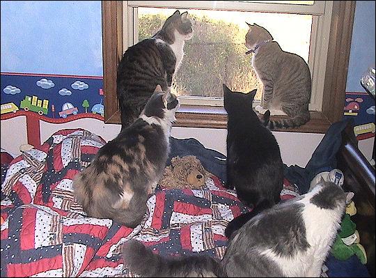 All my kitties