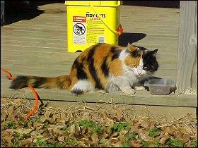 Gabby Cat