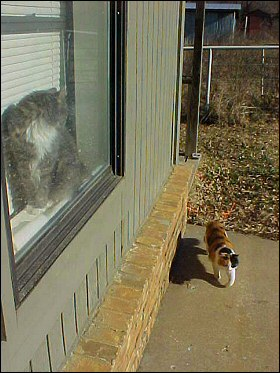 Chloe and Gabby Cat