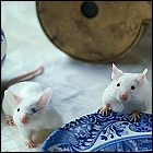 Hitchhiker's Guide mice